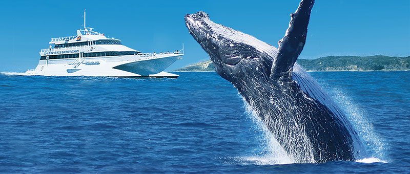 tangalooma whale watch features